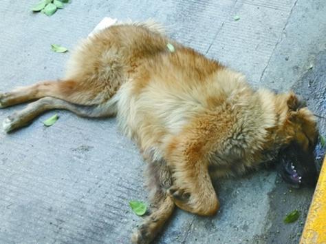 梦见狗死亡 周公解梦梦到狗死亡是什么意思