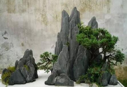 假山盆景制作方法_假山盆景植物的种植方法